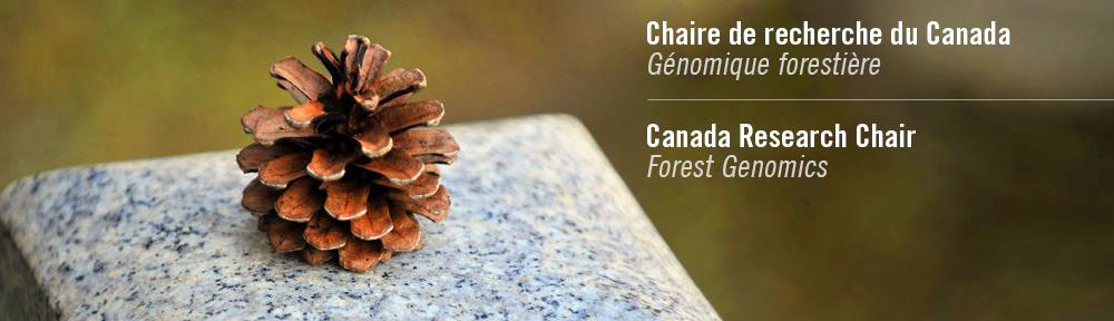 Chaire de recherche du Canada en génomique forestière